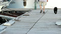 Man and dog walk on dock Stock Footage
