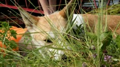 Dog in grass - stock footage