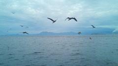Seaguls Stock Footage