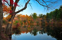 Peak fall foliage - stock photo
