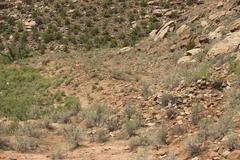 Ancient destroyed Anasazi Indian village 1625.jpg Stock Photos