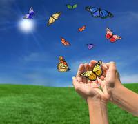 butterflies flying outdoors towards the sun - stock illustration