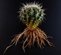 Cacti Roots - stock photo