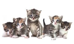 cute newborn baby kittens easily isolated on white - stock photo