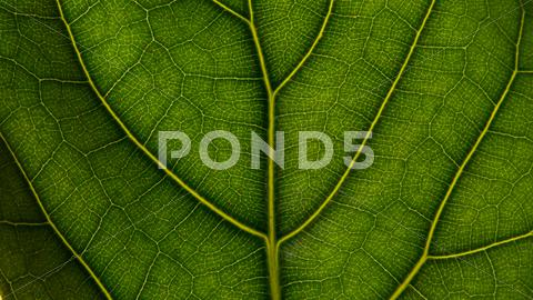 Stock photo of Leaf close up