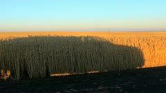 Truck shadow and wheat fields Stock Footage