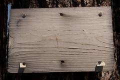 old grungy wood sign on a pine tree - stock photo