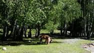 Pasture Stock Footage