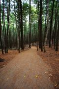 walking hiking trail through the woods - stock photo