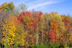 Brilliant Autumn Hillside - stock photo