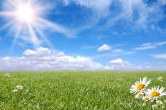 Stock Photo of bright beautiful daisy and grass field