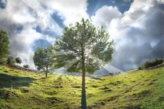 Stock Photo of the tree of life, green nature
