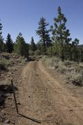 A barb wire fence across a dirt road in the forest Stock Photos