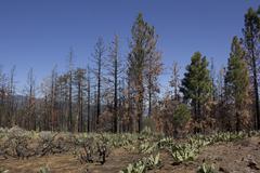 Burnt hillside with blue skies Stock Photos