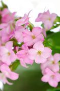 Kaunis vaaleanpunaiset kukat ja vihreät lehdet Kuvituskuvat