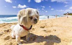 Stock Photo of Beach Dog