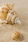 Sea shell and conch on sand Stock Photos
