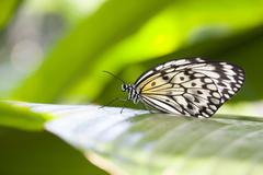 Stock Photo of Paper Kite Butterfly