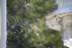 Spider Webs - stock photo