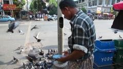 Man  feed pigeons, Yangon, Myanmar Stock Footage