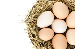 eggs closeup - stock photo