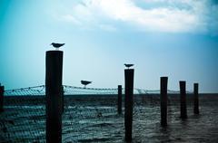 lintu siluetteja - stock photo