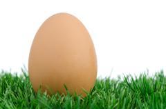 egg on grass - stock photo