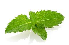 fresh mint close up - stock photo