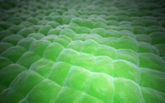 plant tissue close-up - stock illustration