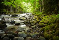 Stock Photo of mountain river in the wood