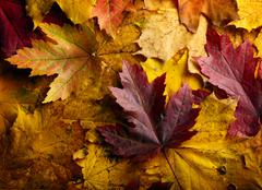 Autumn leaves background Stock Photos