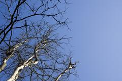 bare tree and sky - stock photo