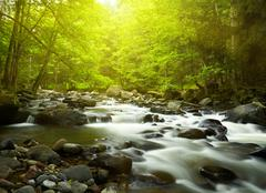 mountain river in the wood - stock photo
