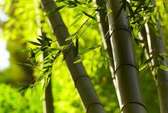 Bambu metsä tausta Kuvituskuvat