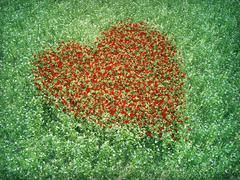Meadow red heart shpaed flowers Stock Illustration