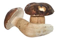 boletus edulis (aereus) - stock photo