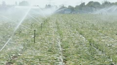 agricultural irrigation - stock footage