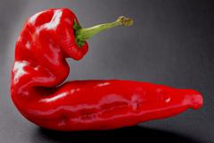 Red pepper on grey background Stock Photos