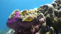 Tropical Underwater cutie Stock Footage