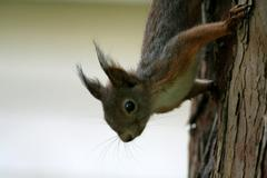 squirrel on a tree trunk - stock photo