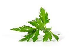 fresh curly leaf parsley - stock photo