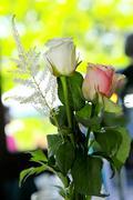 rosen - stock photo