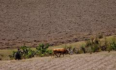agriculture in peru - stock photo