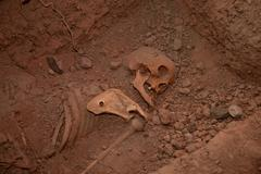 skeleton in grave - stock photo