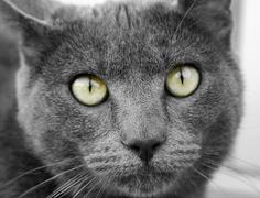 Cat Eyes Close Up Stock Photos