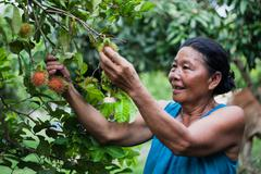 Asian old woman with her rambutan farm Stock Photos
