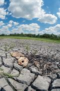 Stock Photo of dead fish on dry wetland