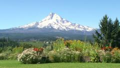 Mountain and Flower Field Stock Footage