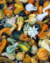 Colorful wing gourds Stock Photos