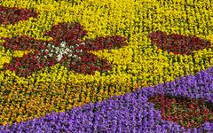 colorful flowerbed - stock photo